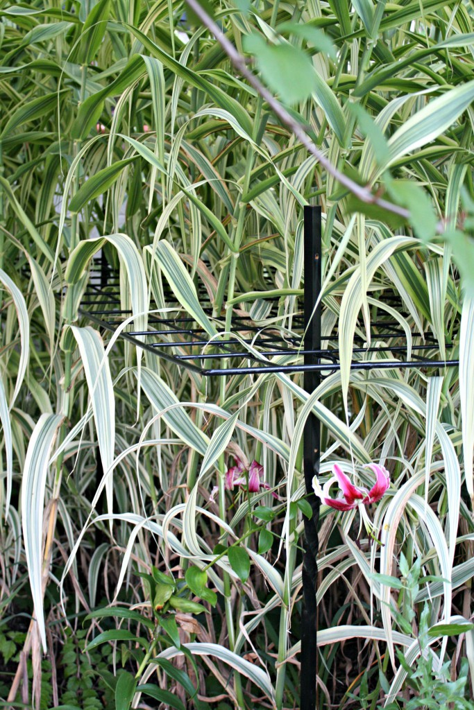Hidden Ornamental Grass Stand