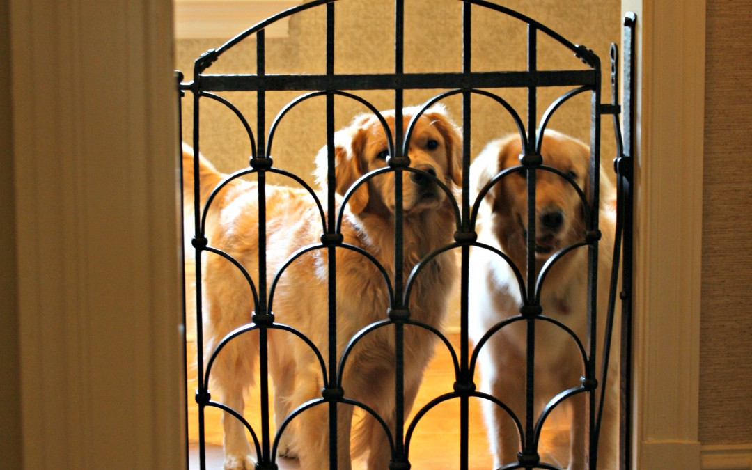 Custom dog gate for these beautiful goldens antietam - Interior decorative wrought iron gates ...